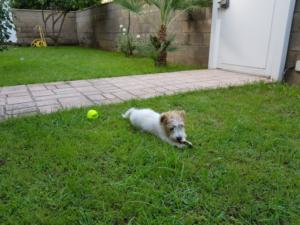 Lucky e il giardino